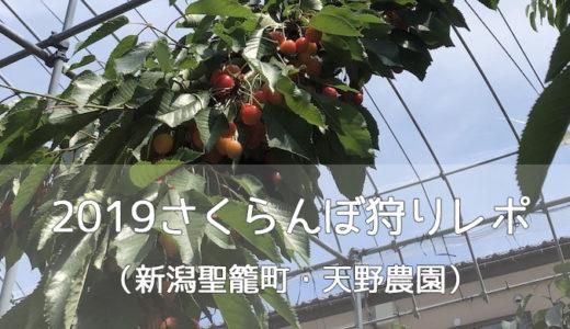 【聖籠町】さくらんぼ狩りレポ【新潟2019.6】