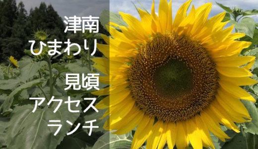 【津南・ひまわり畑】開花状況!2019見頃・マップ・ランチ