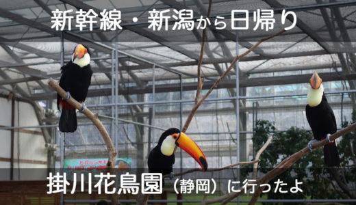 【日帰り・掛川花鳥園】新潟から新幹線で行ってきました!【費用・日程】