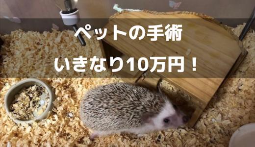 【ペット保険】小動物でも手術で10万円かかるかも!?